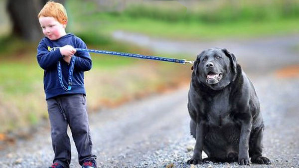 Dog Food That Made Dogs Live Longer
